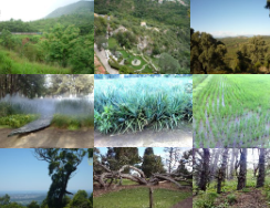 Place pictures of forests and gardens as your Desktop Background